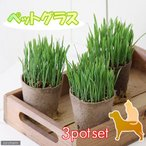 (観葉)ペットグラス 猫草 ネコちゃんの草 燕麦 直径8cmECOポット植え(無農薬)(3ポットセット)