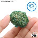 (水草)巻きたて ヘアーグラス ショートボール(無農薬)(5個) 北海道航空便要保温