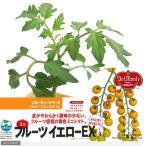 観葉植物 デルモンテ 野菜苗 トマト フルーツイエローEX 黄色ミニトマト  3号 1ポット  家庭菜園