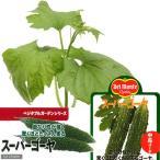 (観葉)緑のカーテン デルモンテ 野菜苗 スーパーゴーヤ 3号(1ポット) 家庭菜園