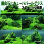 (水草 熱帯魚)風山石とキューバパールグラス 30cm水槽用レイアウトセット(無農薬) 本州四国限定