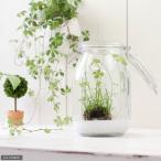 (水草)私の小さなアクアリウム 〜窓辺のベトナムクローバーボール〜 キャニスター式ボトル 寸胴型 本州・四国限定