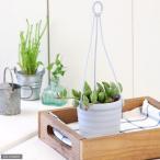 (観葉植物)ぶらりサキュレント アーモンドネックレス 3号吊り鉢タイプ(1鉢) (説明書付)