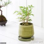 (盆栽)ハゼノキ(櫨の木) 3号(お買い得3ポットセット)