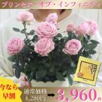 母の日 2021 花 プレゼント ミニバラ 薔薇 鉢植え 花とスイーツ 早割 5号鉢 ギフト スイーツ 送料無料 プリンセス・オブ・インフィニティ