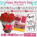 母の日 ギフト カーネーション5号鉢 + 選べるカタログギフト(15品目掲載)  送料無料