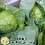 グリーンボール 8玉 有機栽培 宮崎県産 オーガニック 冷蔵便 業務用 まとめ買い キャベツ 送料無料