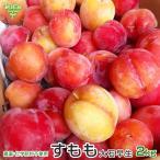 すもも(大石早生) 2kg 熊本県産 化学肥料・農薬不使用 ぷらむ スモモ 冷蔵便 送料無料 大きさおまかせ 数量限定