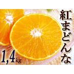 ★「紅まどんな」 約1.4キロ 愛媛産 秀品 ハウス栽培★「プリプリ食感」がたまらない新感覚柑橘