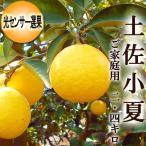 光センサー選果 土佐小夏 ニューサマーオレンジ 日向夏 約2.4キロ 高知産 ご家庭用 ギフト
