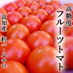 高糖度フルーツトマト 約1.8キロ 高知県夜須町産 ご家庭用 高糖度 糖度8度以上 中玉トマト 高級 ギフト プレゼント 産地直送 甘い 国産 ジュース ゼリー