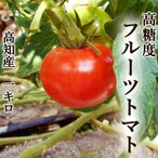 高糖度フルーツトマト 約1キロ 高知県夜須町産 ご家庭用 高糖度 糖度8度以上 中玉トマト 高級 ギフト プレゼント 産地直送 甘い 国産 ジュース ゼリー