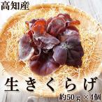生きくらげ 生木耳 高知産 約50g×4個セット 菌床栽培 国産 キクラゲ お刺身 しゃぶしゃぶ おでん 炊き込みご飯 佃煮 中華
