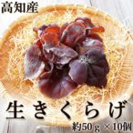 生きくらげ 生木耳 高知産 約50g×10個セット 菌床栽培 国産 キクラゲ お刺身 しゃぶしゃぶ おでん 炊き込みご飯 佃煮 中華