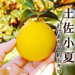 わけあり 土佐小夏 ニューサマーオレンジ 日向夏 約5キロ 高知産 ご家庭用 M〜2Lサイズ ...