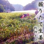 掘りたて 生姜 約4キロ 高知産 送料無料 掘った翌日発送 期間限定 日本一の産地からお届け しょうが ショウガ 国産 giger 紅茶 パウダー 粉末 シロップ 生姜湯