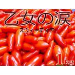 「乙女の涙(スウィーティア)」 約1kg 高知県「さんさんファーム」産ミニフルーツトマト 「ご予約品」