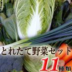 とれたて野菜 11種類セット 高知産 レシピ・追加機能つき 送料無料 [Qv11] 詰め合わせ クール便 新鮮 葉物 根菜 香味 定番野菜 翌日発送も可 土佐 四国