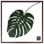 グリーン 額付 モンステラ リーフ アートパネル  F-style Frame Monstera Deliciosa IFF-52332 美工社 77.5×77.5cm お洒落 観葉植物 インテリア