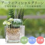 消臭アーティフィシャルグリーン サキュレントリフレリウム CT触媒加工インテリア造花 KH-60985 キシマ 消臭抗菌グリーン 観葉植物 インテリア