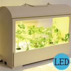灯菜 OMA05 IV Akarina05(アイボリー) LED 水耕栽培 インテリア 照明 おしゃれ デザイン 家庭菜園 リビング キッチン ダイニング カフェ