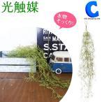 光触媒 人工観葉植物 光触媒Green グリーンブッシュ モス 498741D (送料無料)