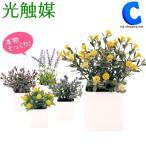 光触媒 観葉植物 フェイクグリーン 人工観葉植物 デイジー ポムミニ ラベンダー 光触媒Green キューブポット Cubepot (送料無料)