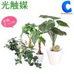 光触媒観葉植物 人工観葉植物 フェイクグリーン インテリア 大型 おしゃれ シュガーバイン パキラ など 6種類 リアル (送料無料)