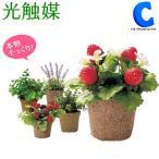 光触媒 観葉植物 おしゃれ フェイクグリーン 人工観葉植物 ストロベリー ラベンダー 計5種類 光触媒Green ミニグリーン (送料無料)