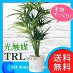 光触媒 観葉植物 大型 おしゃれ サイプレス 人工観葉植物 光触媒Green TRLシリーズ 498383D (送料無料)