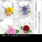 凛蝶ドーム入り 胡蝶蘭とバラのアレンジプリザーブドフラワー花