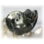 モロッコ産 ゴニアタイト 磨き化石 【GONIATITES-01】--1500