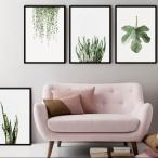 アートポスター アートプリント ポスター グリーン 30x40 送料無料 ウォールアート ポスター 観葉植物 多肉植物 おしゃれ 北欧 インテリア
