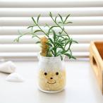 フェイクグリーン 人工観葉植物 ファミーユ 消臭アーティフィシャルグリーン ジャック ( 造花 人工植物 観葉植物 )
