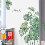 ウォールステッカー 観葉植物 モンステラ グリーン 南国 夏 はがせる 壁飾り カフェ インテリアシール
