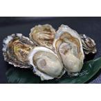 カキえもん 殻付き牡蠣 L-size(70g〜90g未満) 20個入(カキムキナイフ付き)