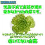 農薬不使用巻いてない白菜1株(梱包料別)