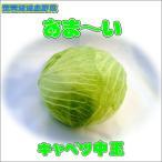 農薬不使用甘くておいしいキャベツ中玉(梱包料別)