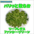 農薬不使用おいしいリーフレタス ファンシーグリーン1株約400g(梱包料別)