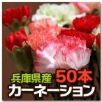 カーネーション 花束 50本 切り花 切花 兵庫県産