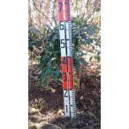 苗木 植木 マンリョウ 万両 H=60cm