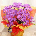 お部屋の空気清浄 光触媒加工された胡蝶蘭鉢植え 花ギフトに