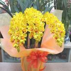 シンビジューム 鉢植え 黄色 3本立て Sサイズ 光触媒加工された本物そっくりな造花の蘭の花
