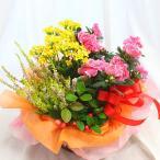 鉢植え 花 ギフト おまかせ寄せ鉢ミックス ギフト 「L サイズ」 商品画像配信付 送料無料