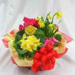 季節の花鉢 寄せ鉢 ギフト 誕生日 お祝い 記念日に 「Mサイズ」 送料無料