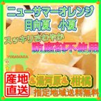 ニューサマーオレンジ5kg 防腐剤不使用 日向夏 ひゅう