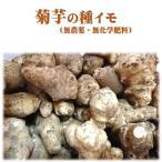 菊芋/キクイモの種イモ 10個おまけ付き 無農薬・無化学肥料栽培の種
