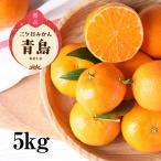 【送料無料】特選!三ヶ日みかん 青島濃厚熟みかん 5kg濃厚でコクのある甘さが魅力!【三ケ日みかん農家直送】