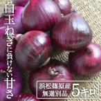 たまねぎ 浜松篠原産 赤玉ねぎプレミアムレッド5kg 辛くない 新玉ねぎ!タマネギ 玉葱