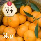 【早割10%OFF】三ヶ日みかん 早生 5kg濃厚でコクのある甘さが魅力!【三ケ日みかん農家直送】